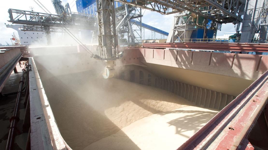 Se fortalecen exportaciones de maíz