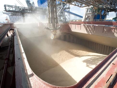 Avanza siembra y cae precio de los granos