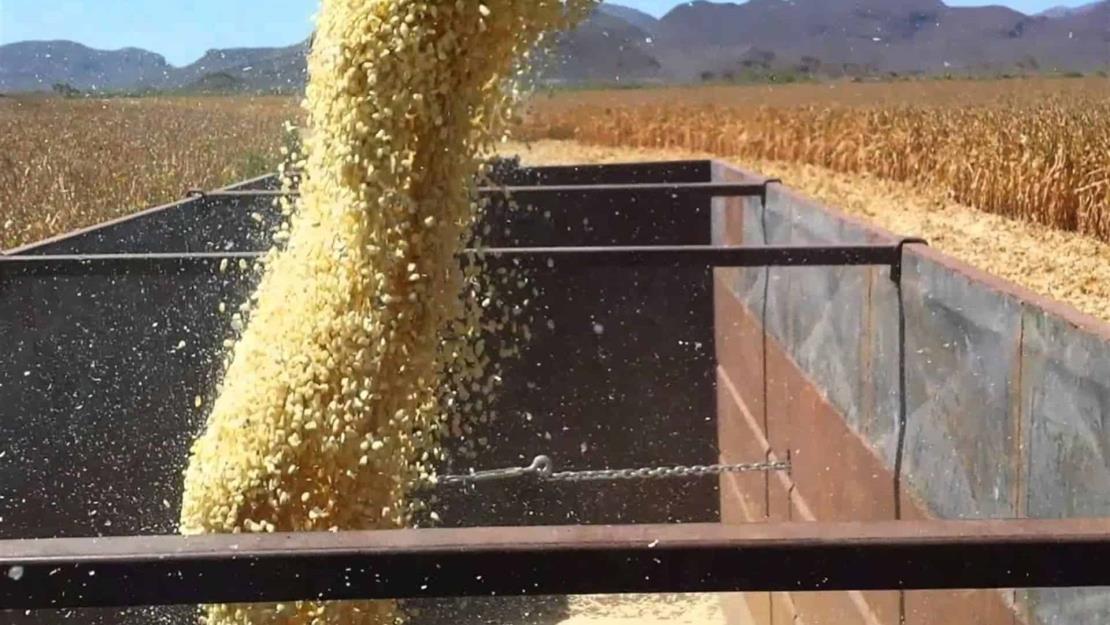 En un mes los futuros del maíz subieron 43 dólares