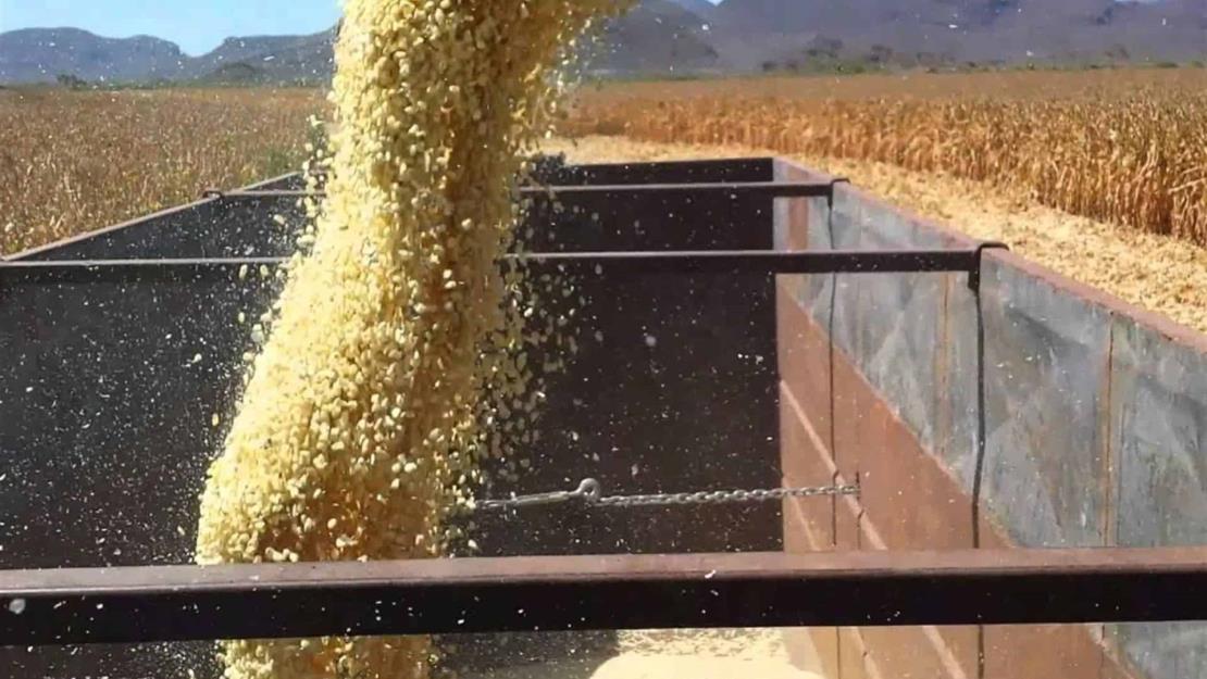 Precio del maíz en $6 mil 161