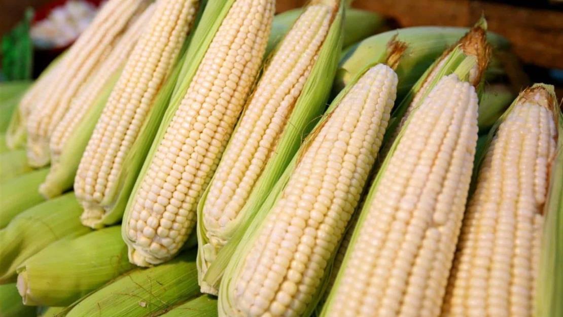EUA alcanza meta de exportación de maíz