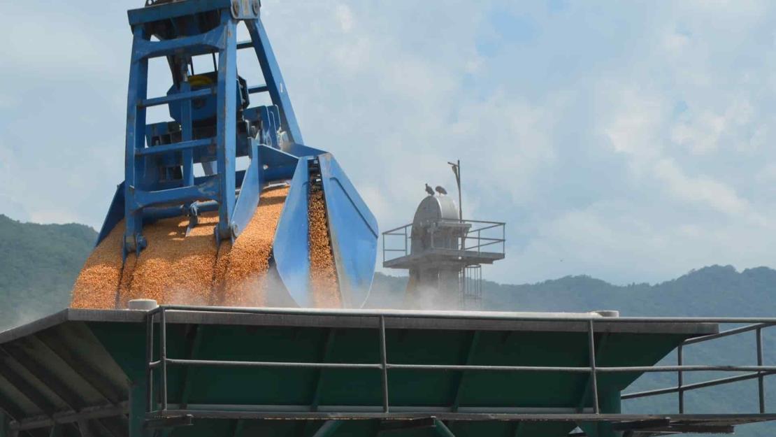Segalmex ha pagado el 35.6% del maíz contratado en Sinaloa