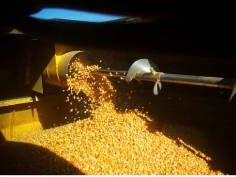 Cierran a la baja precios de los granos en Bolsa de Chicago