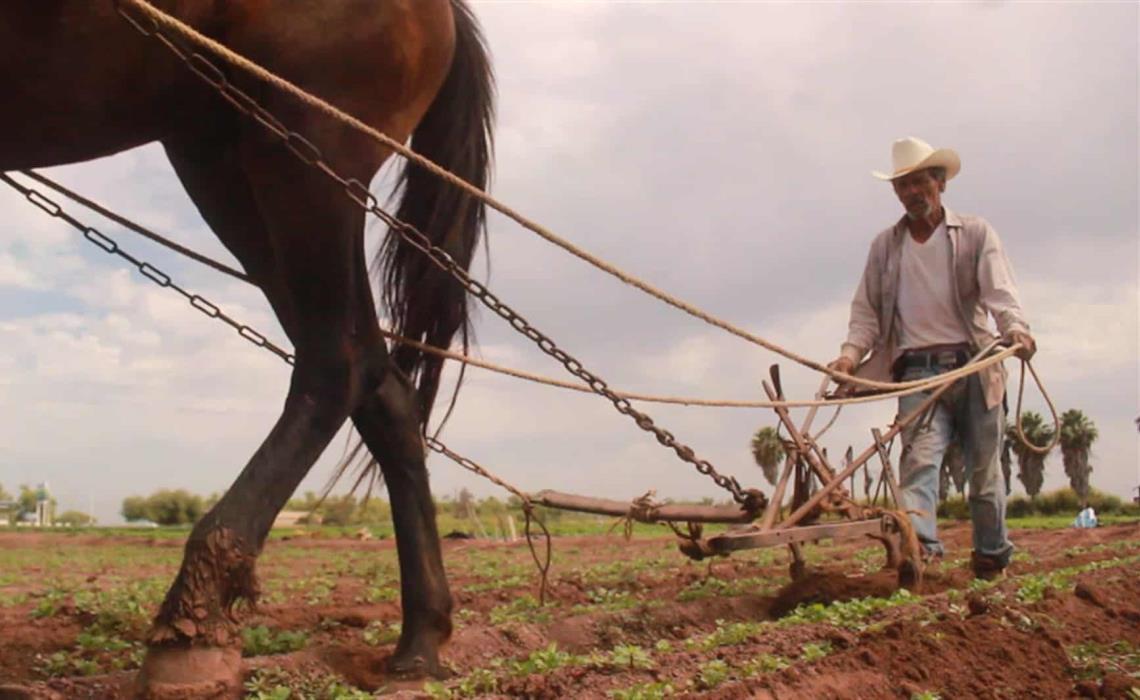 La tierra es de quien la trabaja. FOTO: Martín Ruiz.