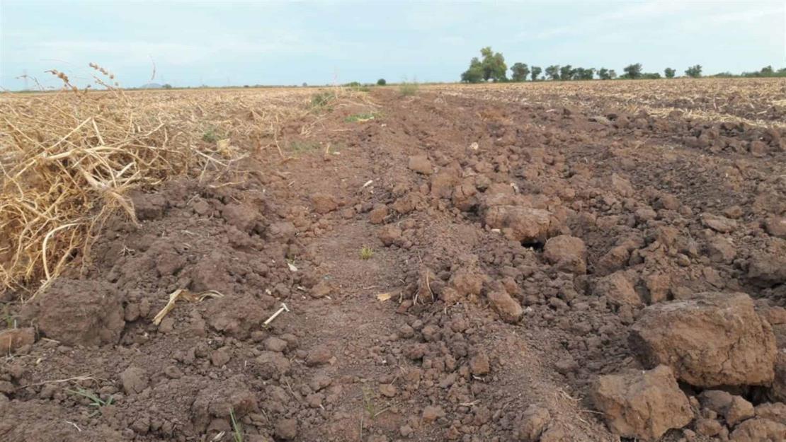 Reporta CNC más de 20 mil hectáreas de temporal siniestradas por sequía