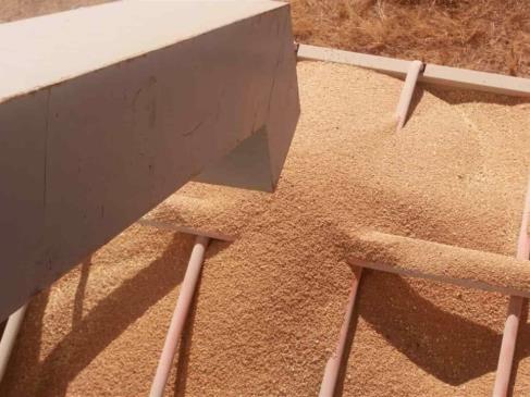 Baja precio del maíz a $5 mil 977.4