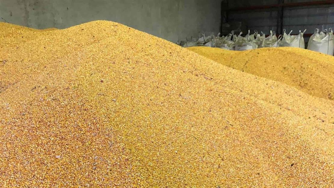 Suben precios a futuro de maíz y trigo