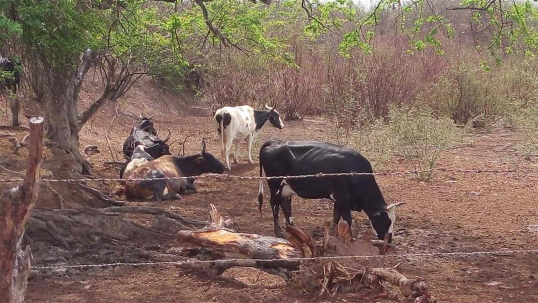 Buscan promover cultura de la hidroponía para alimentar el ganado con forrajes verdes