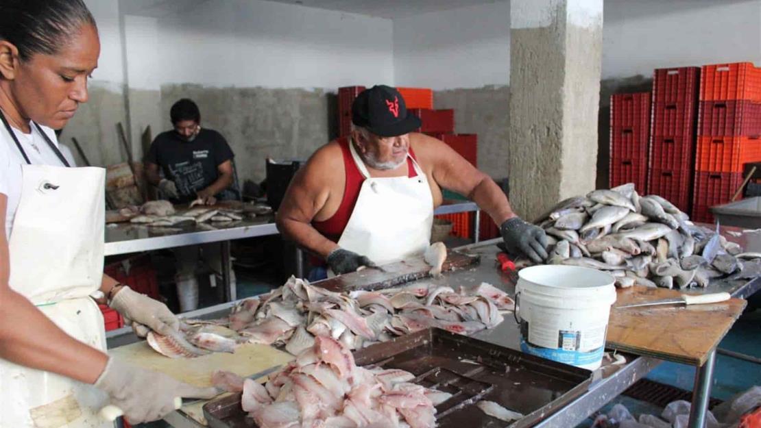 Anuncian Programas Especiales de Pesca en Sinaloa