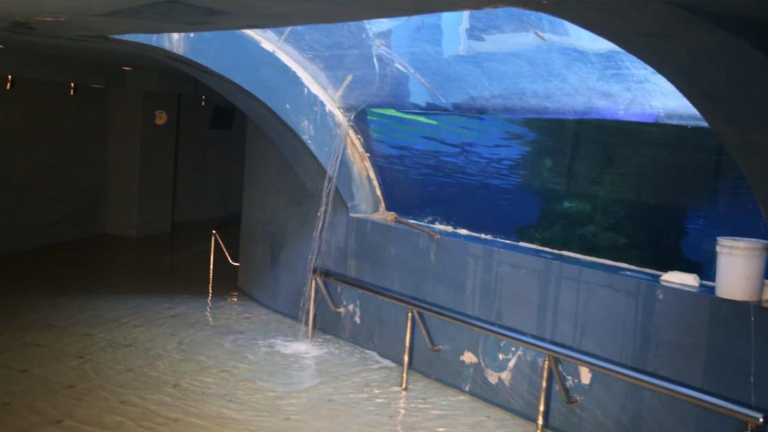 Exfuncionarios pagarán 3 mdp por fallas del tiburonario