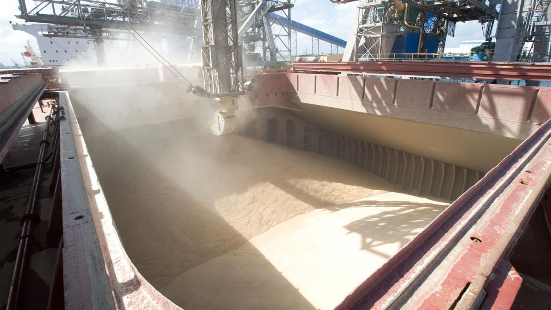 China aumentará la superficie de maíz