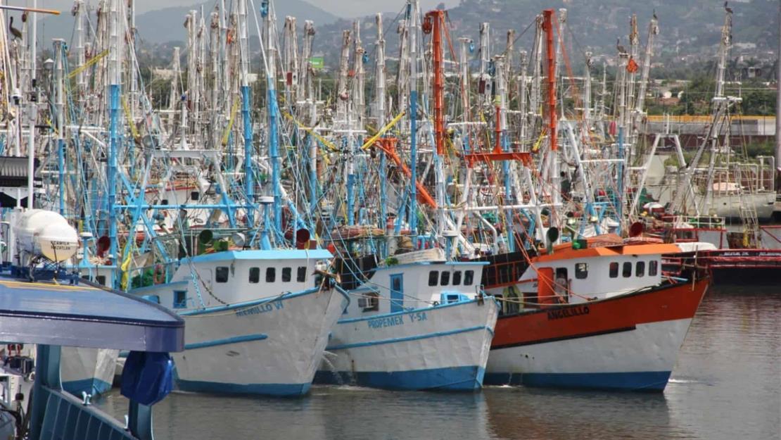 Conapesca confirma calendario de veda de pesca de camarón en el Pacífico