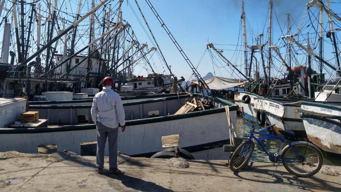 Cientos de pescadores en Mazatlán no pudieron trabajar en captura de camarón