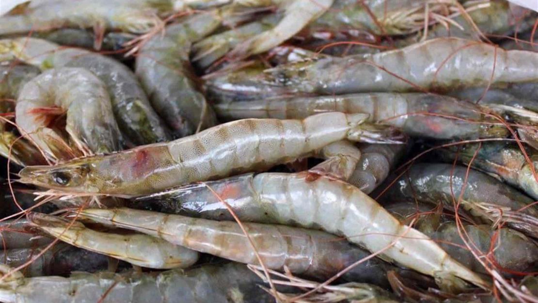 Pescadores, preocupados por descertificación al camarón silvestre