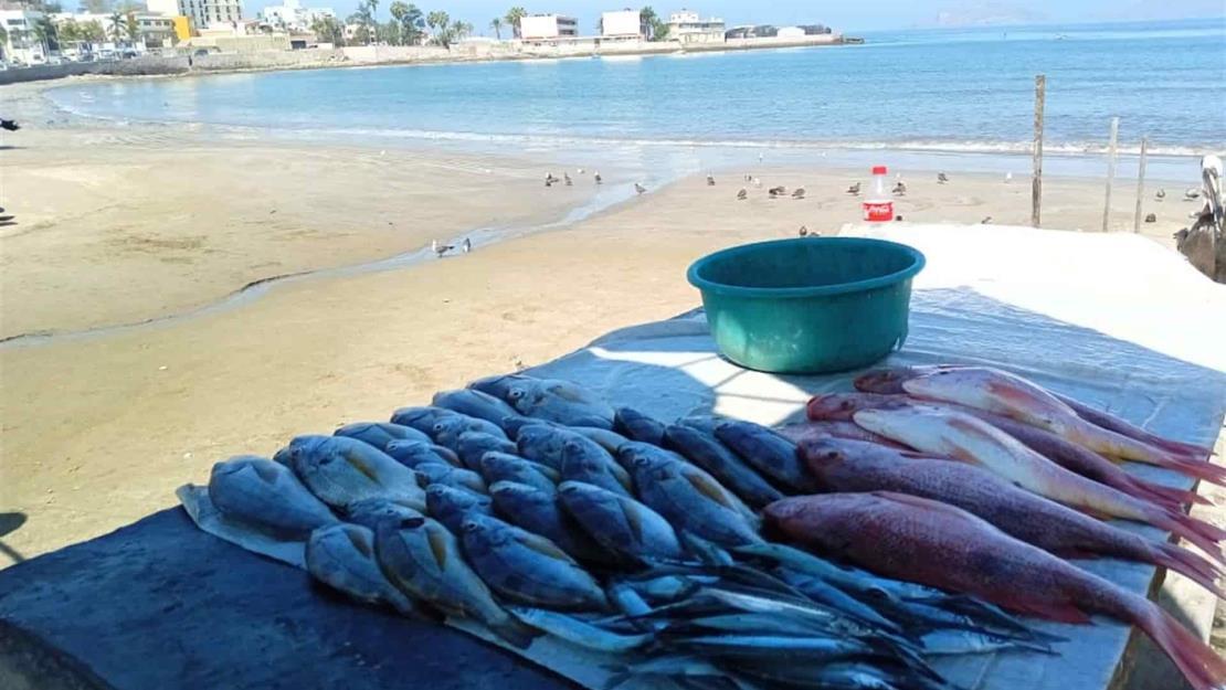 Hay demanda, pero escasean pescados y mariscos en Mazatlán