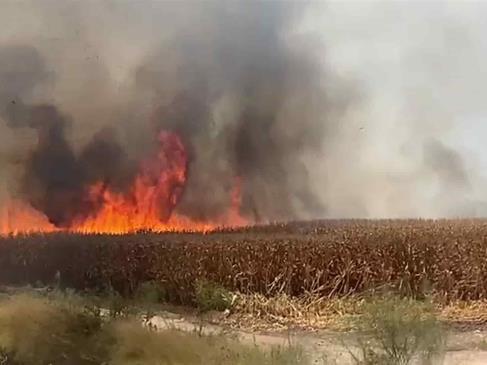 Quema de soca se extiende e incendia 3 hectáreas con maíz en pie