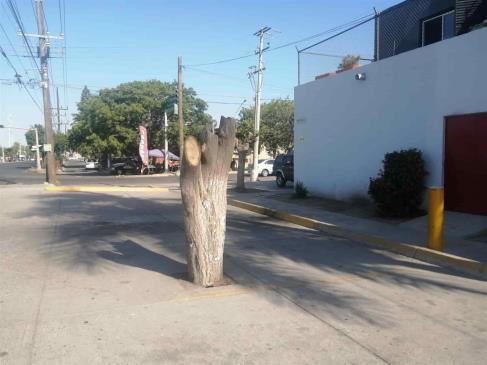 Talan árboles y dejan sin sombra a peatones en Los Mochis