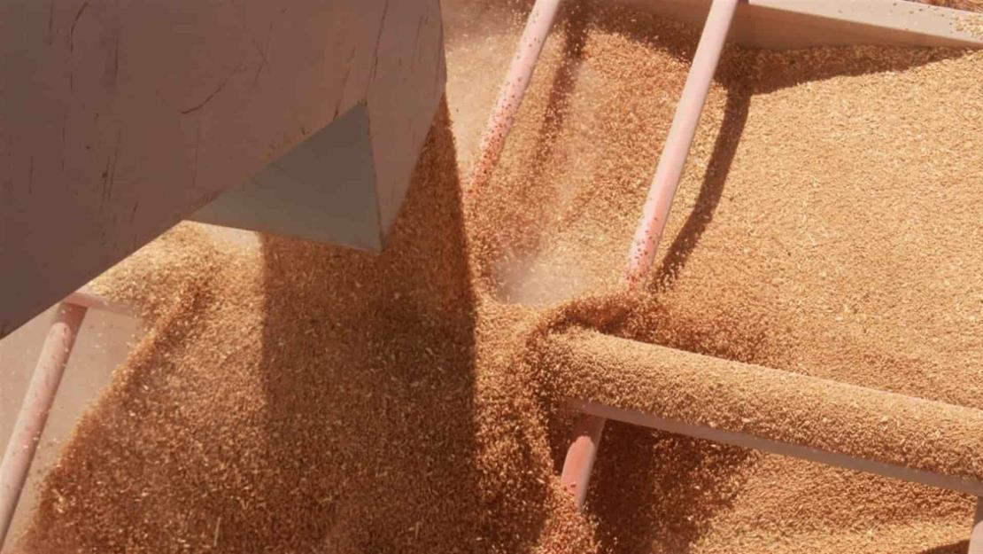 Exigen que Profeco verifique básculas en bodegas receptoras de maíz