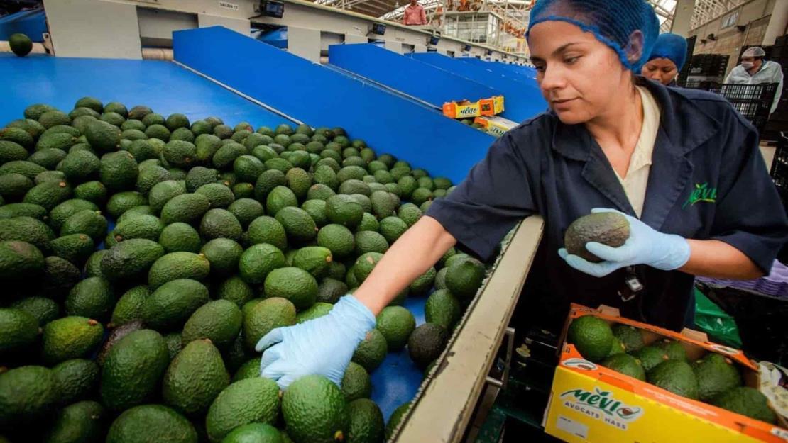 Balanza comercial agroalimentaria, alcanza superávit de 4 mil 230 mdd