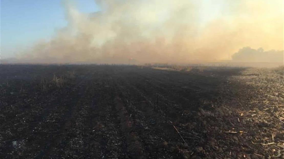 CAP se opone a sanciones drásticas contra productores por la quema de soca