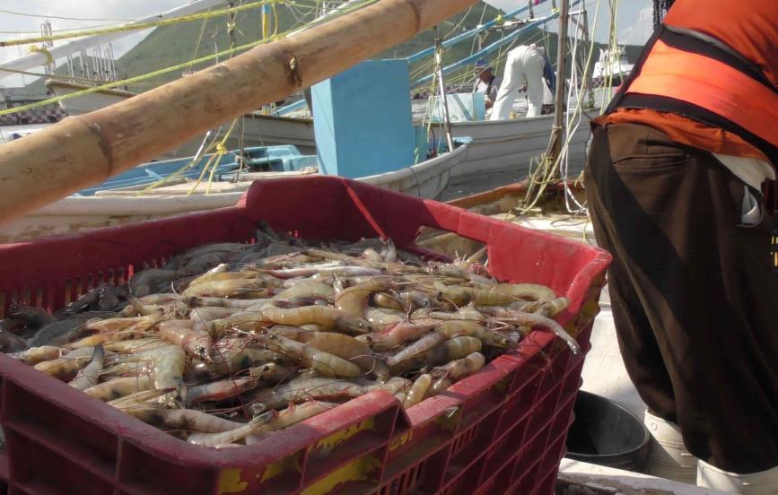 Inicia temporada de captura de camarón 2021 2022